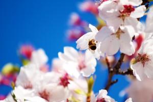 tavaszi relax 300x200 Nyárcsalogató napok a Hotel Napfényben aktualis hirek