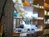thumbs sarkanyfu 2 Sárkányfű Egészség és Biobolt