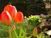thumbs zalakaros tavasz 0013 Tavasz ébredés   tavaszköszöntő   tavaszváró képek Zalakaros aktualis hirek